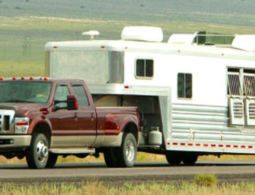 How does the ELD mandate impact the fox trotting horse industry?